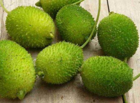 Magical Diabetes Benefits of Spiny Gourd / Teasel Gourd / Kartula / Kantola Vegetable